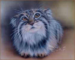 Manul, the Pallas cat by JKfly