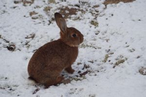 Schnee Hase by DeathProof7891