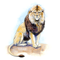 Lion by oxpecker