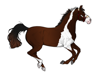 .: 3. Mystery Natural Horse Adopt *Closed* :. by TreckyQueen