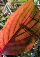 A leaf of color by Naturevulpex
