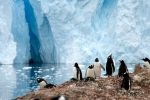 Antarctic Penguins by donahube