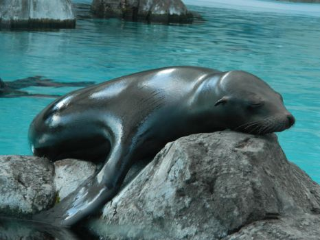 Sleepy Sleek Sea Mammal by Blitztrika