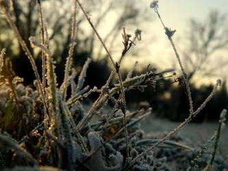 Frozen Grass In Ahwahnee In the morning 2014 by Kiwiberry122