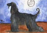 Afghan Hound ACEO by AmandaTolleson