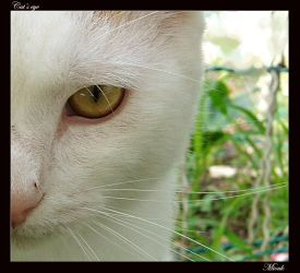 Cat's eye by Miouk