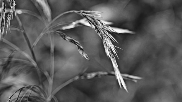 Grain by UdoChristmann