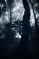 Forest Blues by Weissglut