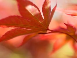 Red leaves by valeriemonthuit