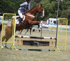STOCK Showjumping 401 by aussiegal7
