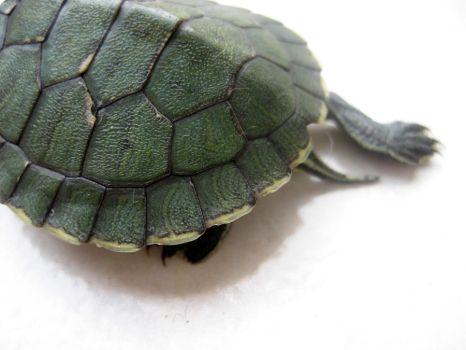 tiny green turtle 03 by turbosianor
