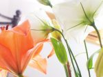 Orange and White II by Caoimhe-Aisling