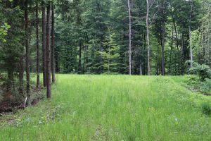 Forest Stock 050 by Malleni-Stock