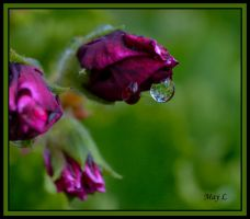 Leaves in the Droplet by MayEbony