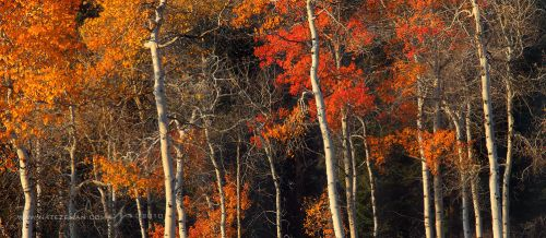 Forest for the Trees by Nate-Zeman