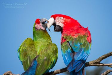 Loving Couple by TammyPhotography