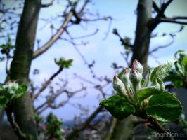 Spring Flower 2012 - 10 by Ingnition