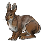 Snowshoe Hare Summer Coat by TokoTime