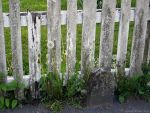 white fence by sommerstod
