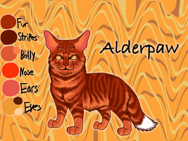 Alderpaw of ThunderClan - The Apprentice's Quest by Jayie-The-Hufflepuff