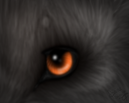 .:Eyes.In.Fire:. by xxleaftrailxx