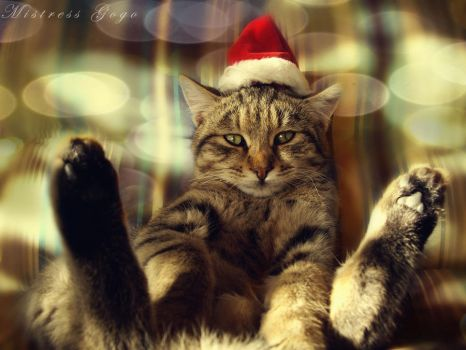 Dare to say dat Santa is Lazy by blondepassion