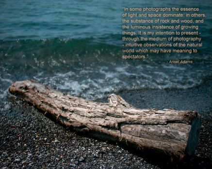 Drift Wood - Ansel Adams Quote by trevorbowers
