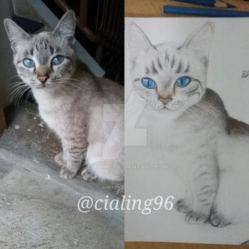 My New Cat by Cialing
