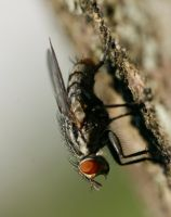Fly on Bark 1 by CageyResources