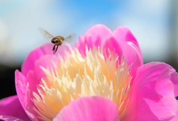 Flower and Bee by tpphotography