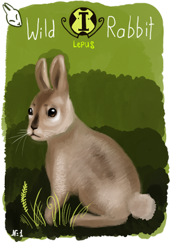 Animacards: Wild Rabbit (#1) by HelgaDi