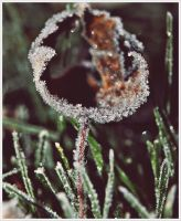 Fresh Morning Frost by GrotesqueDarling13
