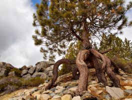 Octopus tree by MartinGollery