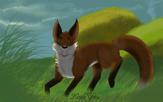 Fox in the plain by LittleYtra