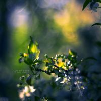 Beneath the Trees by John-Peter