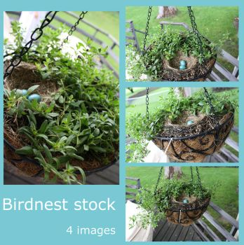 birdnest stock by carro-stalk