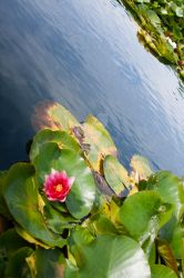 Pond Life by Shell-Buchanan