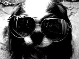 Cool dog. by loria