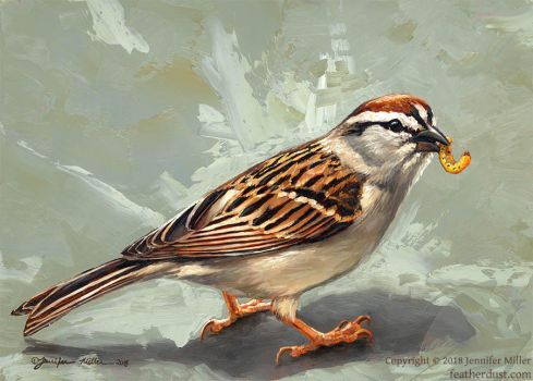 Chipping Sparrow by Nambroth