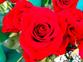 Red roses by vfrrich