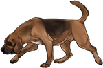 Bloodhound Companion by TokoTime