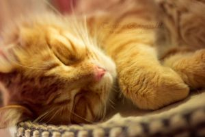 Nap time by TammyPhotography