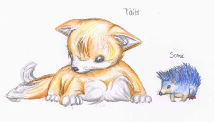 Sonic and Tails: Real animals by SV-Spinny