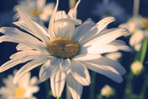 flower in the sun by Oanny