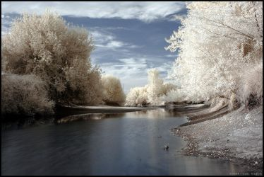 flowing water across the trees by stratys