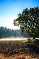 Morning glory of Autumn by SaraJArts
