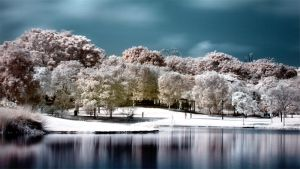 iNfraRed - bOtanical gardens 2 by shin-ex
