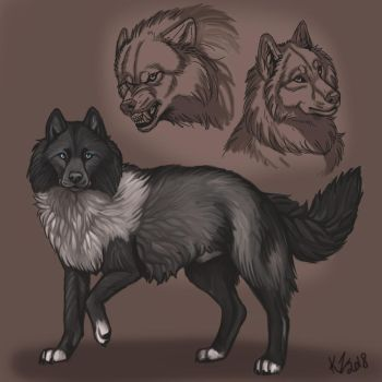 Wolf reference Sheet by NatsumeWolf