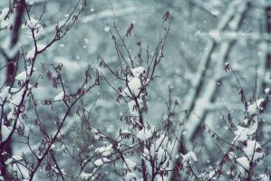 Let it snow. by MelissaBalkenohl
