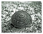 Did u know that a Snail by Sweet-Red-Cherry